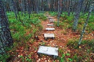 Wooden pathway in autumn forest