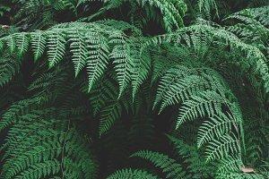 Lush large ferns