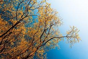 Horizontal vivid orange  leaves branches left aligned design ele