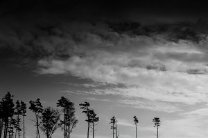 Horizontal black and white landscape forest silhouette backgroun