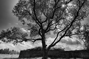 Horizontal black and white dramatic tree background
