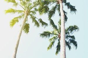 Beautiful Sunny Palms Beach USA