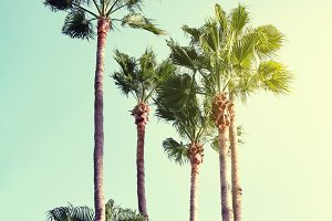 Beautiful Sunny Palms Beach Travel