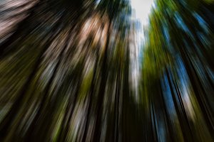 Vertical vivid radial blur zoom forest into the sky background b