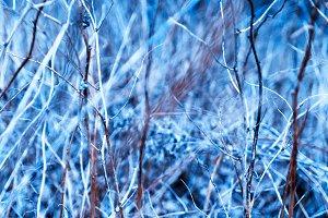 Horizontal vivid bush branches bokeh background backdrop