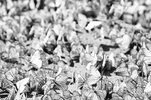 Vertical black and white butterflies flashmob bokeh background