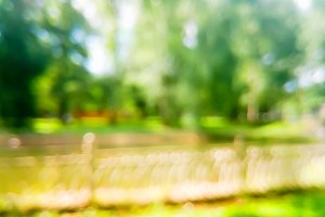 Horizontal summer park bokeh background