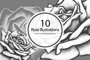 10 Rose Illustrations