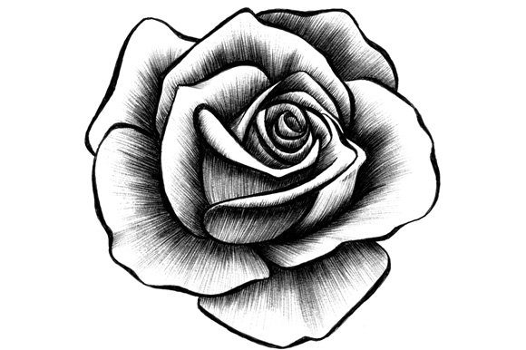10 rose illustrations graphic objects creative market