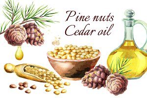 Pine nuts. Cedar oil. Watercolor