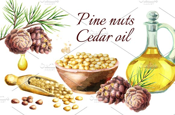 Pine Nuts Cedar Oil Watercolor
