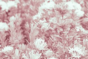 Pink Colored Flowers Background
