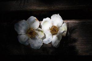 White blooms on dark wooden bench
