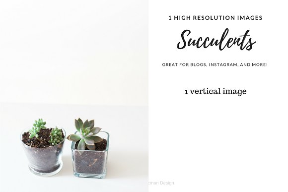 Succulents 5 SALE
