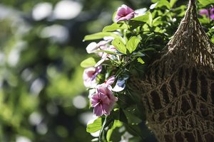 Flowers hanging pot