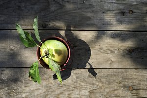 Apple on wood