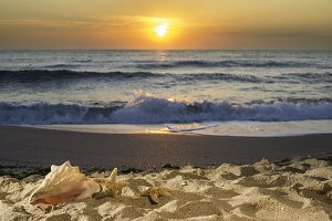 Sunrise on the beach. Shells