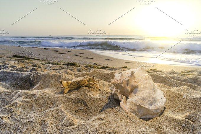 Sunrise on the beach. Shells - Nature