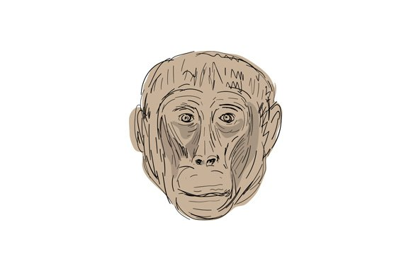 Gelada Monkey Head Drawing