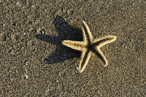 Starfish on the beach.