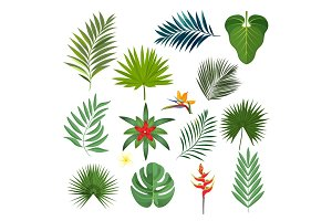 Set of exotic tropical leaves isolated vector illustration on white