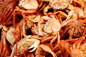 Mediterranean Red Crab Background