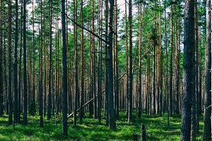 Horizontal vivid symmetric forest wood composition background ba