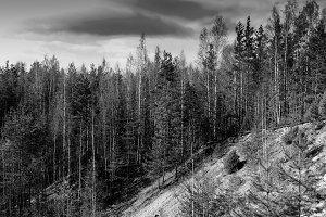 Horizontal vibrant black and white forest landscape background b
