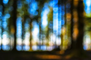 Vivid forest horizon lake bokeh composition abstraction