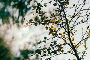 Horizontal vibrant autumn tree branch with sun leak bokeh backgr
