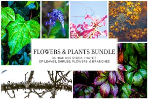 Flowers and Plants Stock Bundle