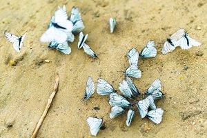 Horizontal vivid white butterflies flashmob on sand background b