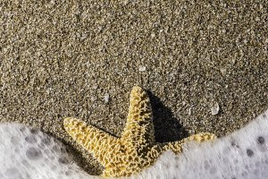 Starfish into the waves