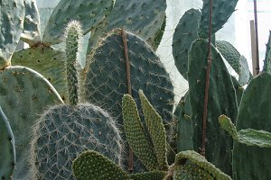Natural background cactus plant and the flower. Cactus succulent plant