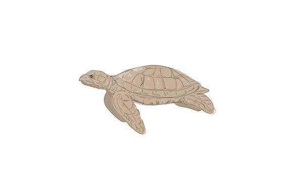 Hawksbill Sea Turtle Side Drawing