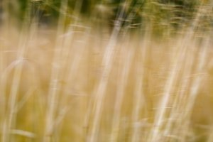 Square vivid yellow grass nature landscape blur background backd