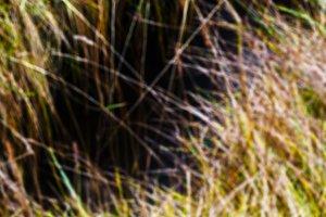 Horizontal vivid yellow green grass bokeh background backdrop