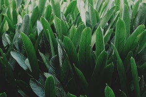 Dense tropical leaves