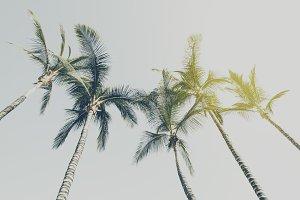 Beautiful Palms on the Beach Top