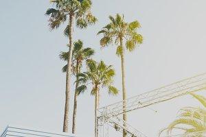 Beautiful Palms on Beach City Sun