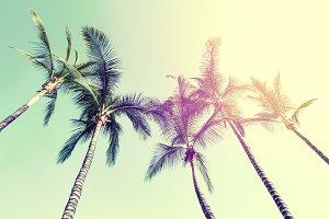 Beautiful Palms on the Beach Top Sun