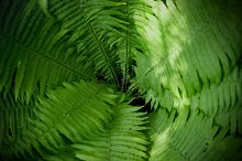 Wonderful fern background