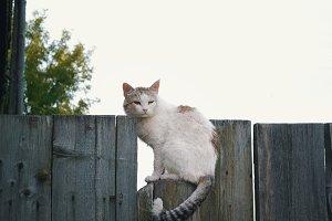 Homeless cat on wooden fence - rural scene