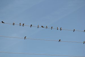 Birds sits on wire in front of blue sky