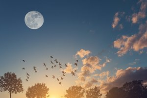 Beautiful sunset with a full moon