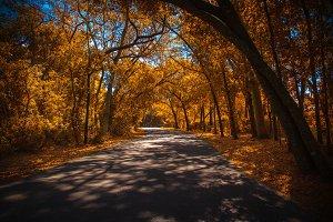 Autumn in Florida