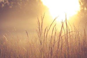 Sunlight illuminating the field