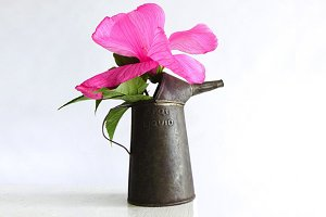 Exotic Flower in Oil Can