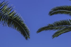 Palms leaves and blue sky