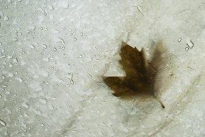 Fallen autumn leaf on tent